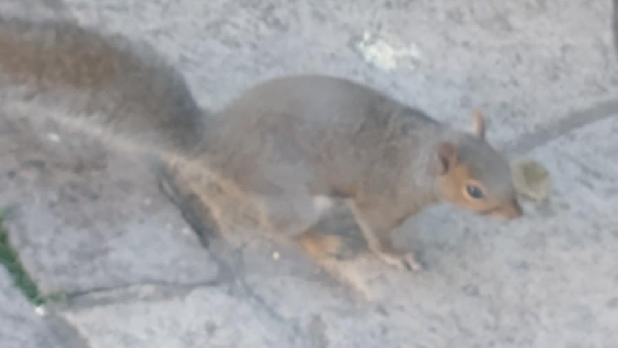 A squirrel on a path
